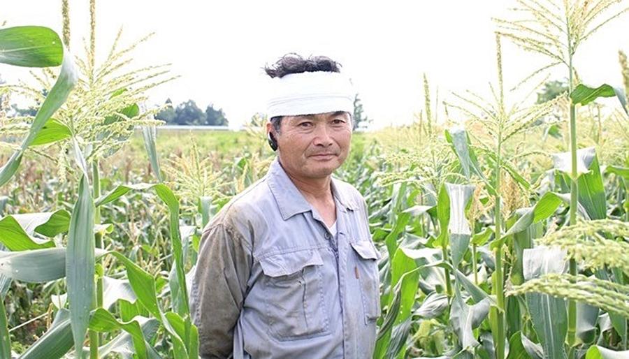 トウモロコシの生産