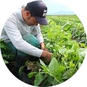 黒埼茶豆の畑
