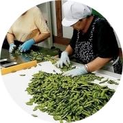 黒埼茶豆の選別